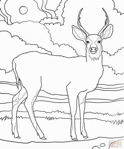 Coloring Pages Deer Realistic Reindeer Getcolorings Printable