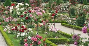 Schädlinge An Rosen : rosen pflanzen pflege krankheiten mein sch ner garten ~ Lizthompson.info Haus und Dekorationen