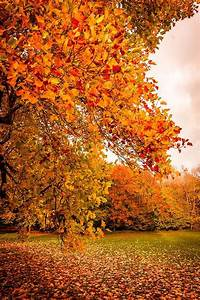 17 Best images about I Love Fall! on Pinterest | Autumn ...