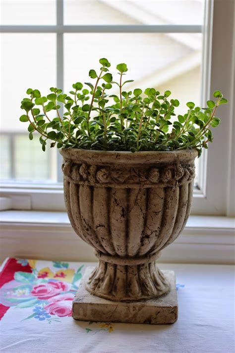 windowsill plants pretty plant hoping think very am