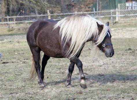 fast jedes pferd oder pony wird sie schon einmal gehabt