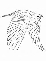 Coloring Bluebird Bird Nevada State Mountain Template Birds Popular sketch template