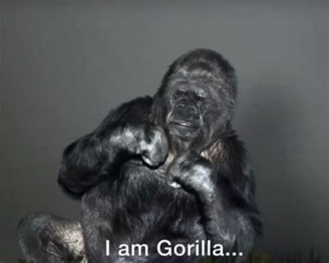 gorilla calls    fix nature  sign