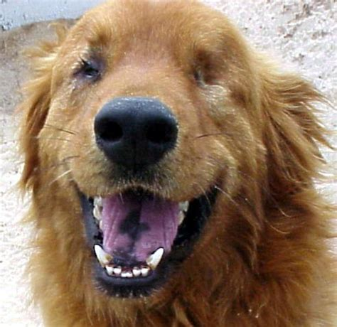blindness in dogs how to a blind and what other things you need to