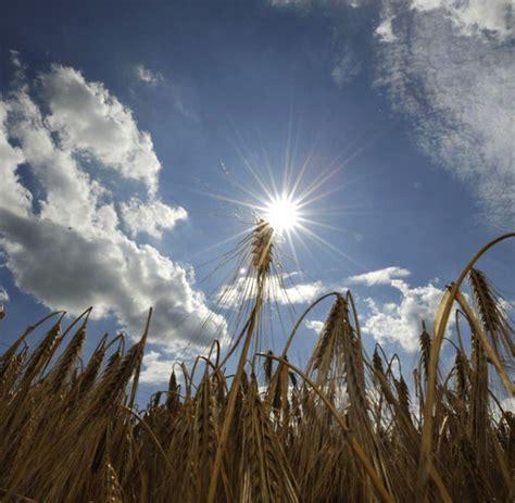 ackerland kaufen rheinland pfalz landwirtschaft investoren sind auf der jagd nach ackerland welt