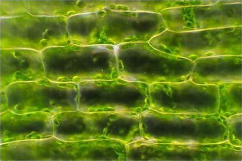 cell images winnacunnet biology