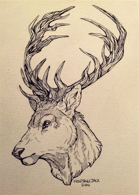 wolfskulljack  tattoo design   client deer