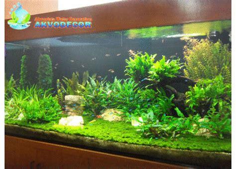 macam macam aquarium jual aquarium bekasi