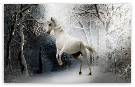 White Horse 4k Hd Desktop Wallpaper For 4k Ultra Hd Tv