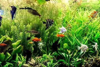 aquarium ab wann fische einsetzen welcher ph wert im aquarium ist optimal heimtest