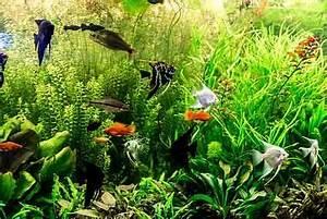 Pflanzen Für Aquarium : welcher ph wert im aquarium ist optimal heimtest ~ Buech-reservation.com Haus und Dekorationen