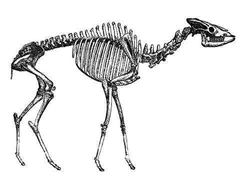 Helladotherium