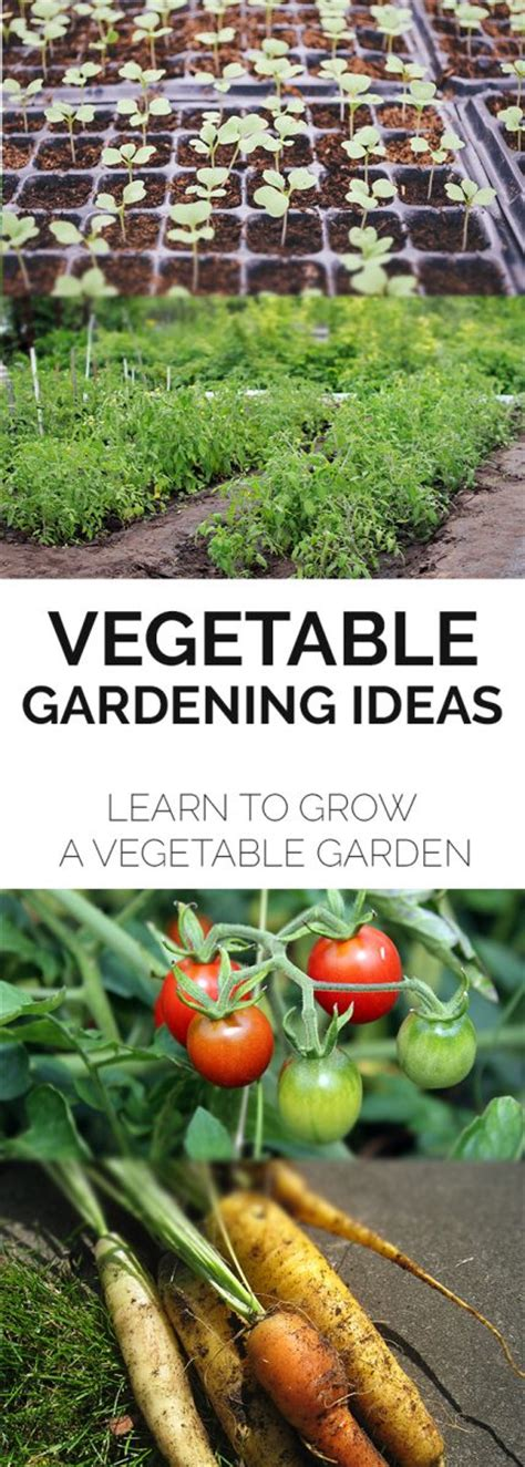 growing a vegetable garden a how to guide