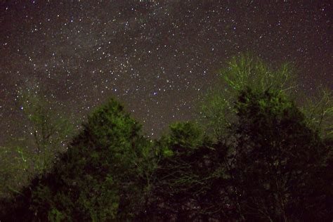 night time   forest  ozark national scenic
