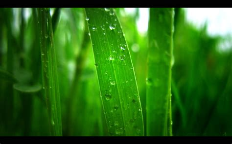 Green Wallpaper Hd green wallpaper hd wallpaperpool