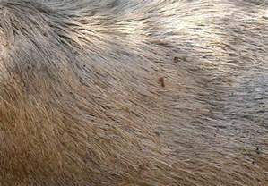 Fur - JungleKey fr Image #100