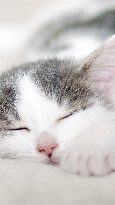 stock images kitten cat cute  stock images
