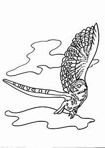 disegno falco da colorare:falco disegno da colorare falco