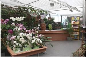 Blumen Für Fensterbank : blumen janke weilerbach orchideen ~ Markanthonyermac.com Haus und Dekorationen