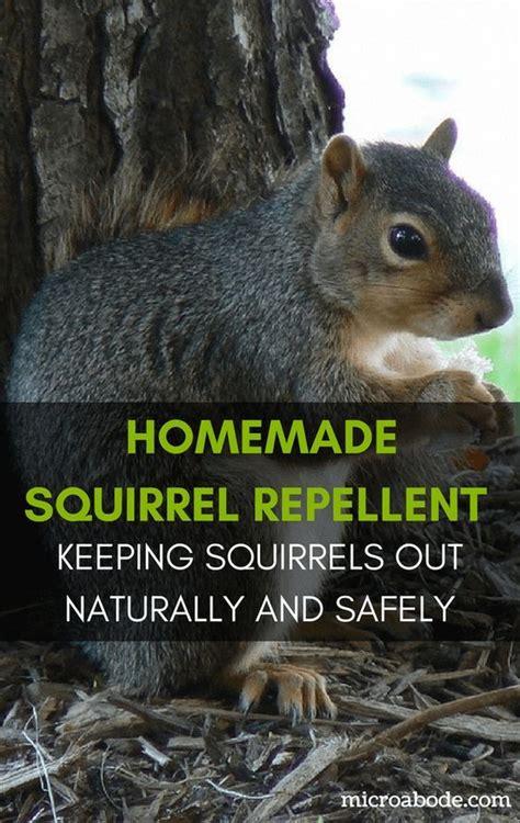 homemade squirrel repellent keeping squirrels