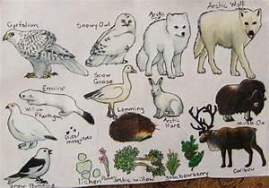 Tundra Food Web By Chemukh Ayet On Deviantart