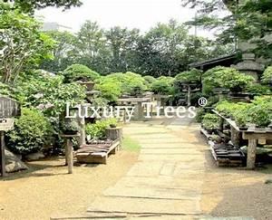 gartenplanung luxurytreesr osterreich With garten planen mit bonsai ficus