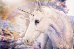 unicorno realistico della foto fotografia stock immagine di bianco stagionale 113216302
