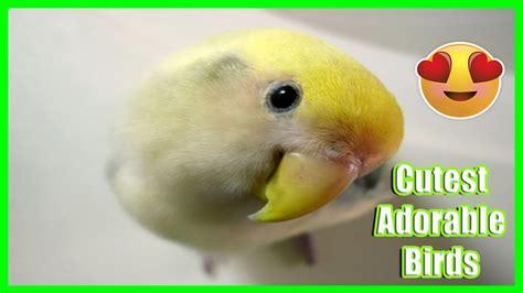 10 Cutest Adorable Birds Youtube