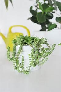 Pflanzen Für Innen : hngende pflanzen innen anthurie rote zora zamioculcas u ~ Michelbontemps.com Haus und Dekorationen