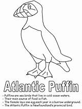 Puffin Coloring Atlantic Newfoundland Drawing Bird Canada Line Birds Printable Map Template Drawings Canadian Flag Clipart Getdrawings Realistic Geography Prey sketch template