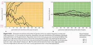 Bio 304  Ecology  U0026 Evolution  Population Genetics