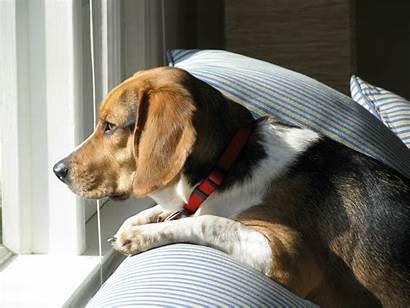 Waiting Dog Cachorros Tempo Pet Jooinn Sentem