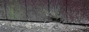 Mäuse Bekämpfen Haus : m use im haus garten oder auf dem dachboden ~ Michelbontemps.com Haus und Dekorationen