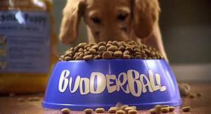 air buddies trailer youtube With buddies dog food