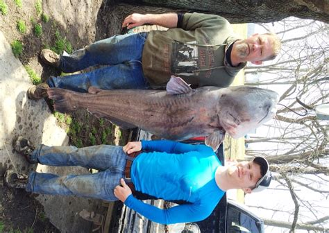 Backyard Trolines by Malta Bend Lands Record 120 Pound Blue Catfish With