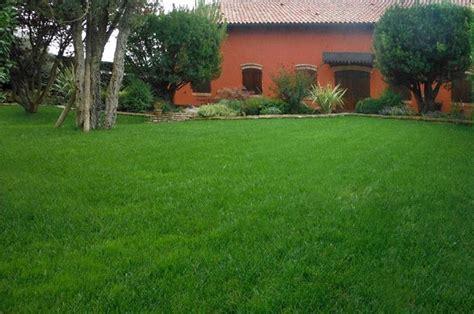 Gartenrasen Rasen