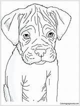 Boxer Puppy Coloring Heart Adults Coloringpagesonly sketch template