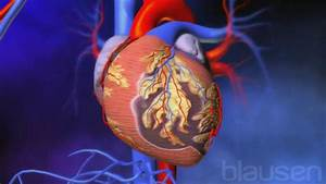 How Do  Cholesterol And  Plaque Affect Your  Heart U0026 39 S