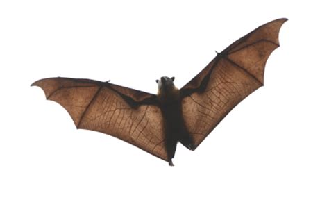 bird control bat removal get rid of bugs critter