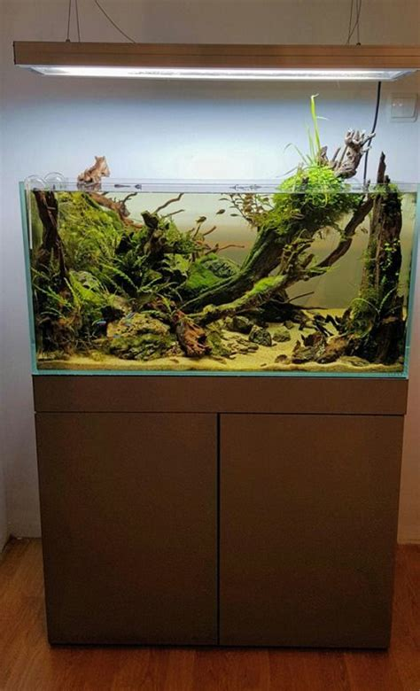aquascape aquarium supplies simon s aquascape aquascape aquarium design