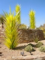 What cool desert plant is this? - TROPICAL LOOKING PLANTS ...