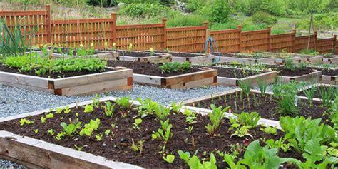 start  vegetable garden bunnings warehouse