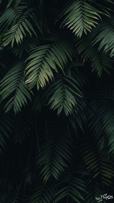 tropical jungle iphone  wallpapers preppy wallpapers