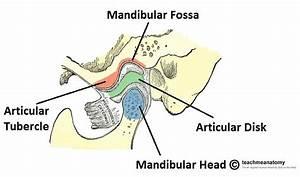The Temporomandibular Joint - Structure