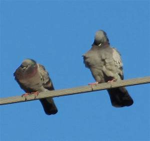 Two Birds On A Wire Photograph by Shawn Hughes