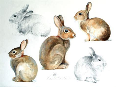 cuisiner le lapin de garenne le de blaise prud 39 hon peintre animalier lapins de