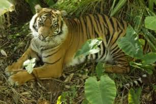 Rainforest Endangered Animals List