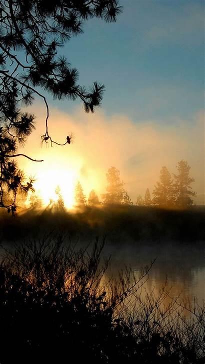 Wallpapers Smartphone Sunrise Forest Mist Phone Getphotos