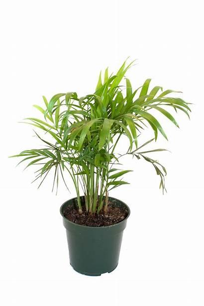 Plant Transparent Clipart Webstockreview