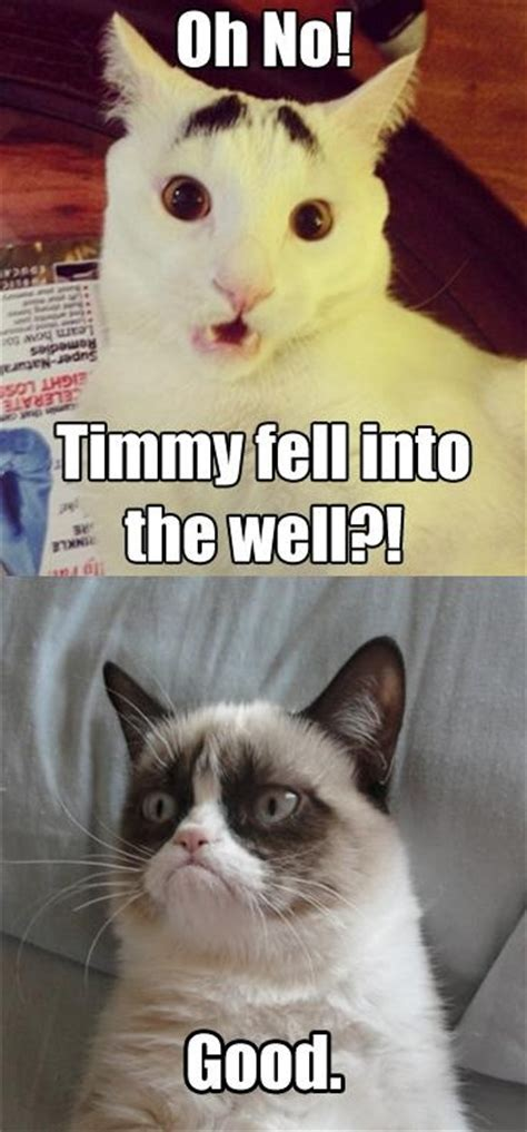 Funny Grumpy Cat Quotes  Pictures Worth Sharing!  Pets World